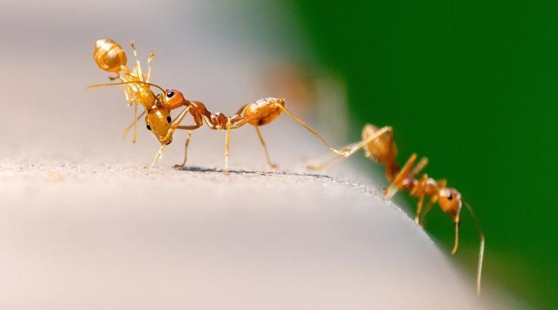mravenci v kredenci
