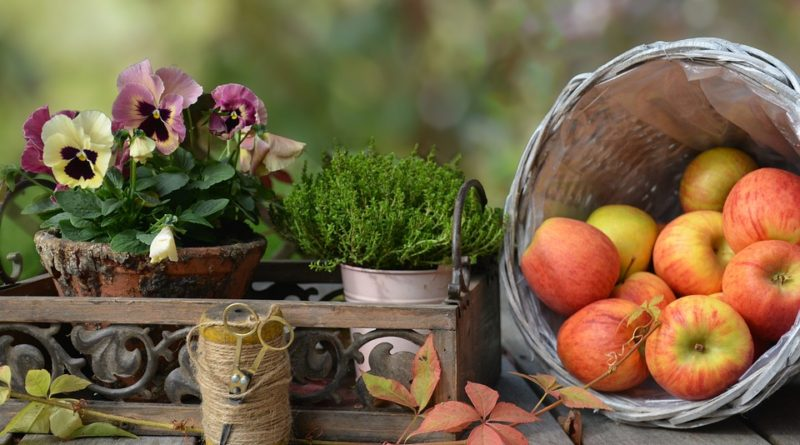 Truhlíky na podzim bez květin? Kdeže. Některé květiny snáší chlad dobře, navíc hezky vypadají