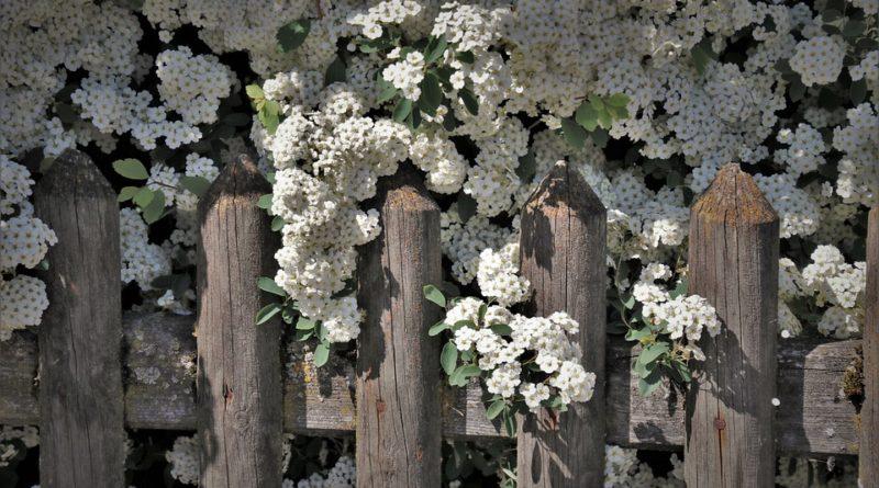 Vyberte vhodný plot pro vaši zahradu